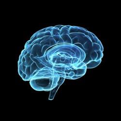 CEO brain